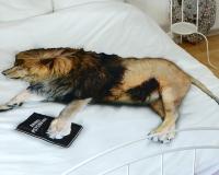 Löwe aus Bettwäsche aus zertifizierter Baumwolle