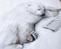 Bettwäsche mit realistischem Eisbären auf hochwertiger Baumwolle