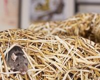 Stroh Kinderbettwäsche mit Maus von Hayka