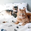 Katzen-Bettwäsche aus reiner Baumwolle von Mumla