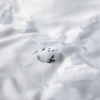 Schnee Bettwäsche Wintertiere Hayka von Foonka