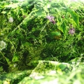 Alpenwiese Bettwäsche Hayka die Almwiese von Foonka
