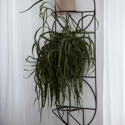 Bettwäsche Zweige